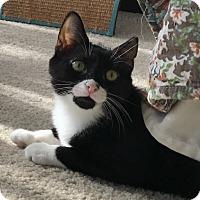 Adopt A Pet :: Sophie - Jackson, NJ
