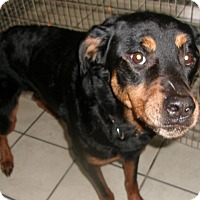 Adopt A Pet :: CHYNA - Coudersport, PA