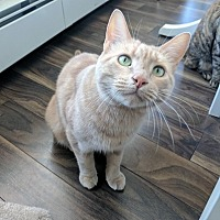 Adopt A Pet :: Neil - Vancouver, BC