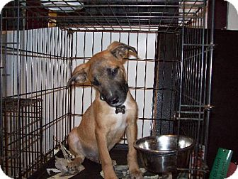 Shepherd (Unknown Type)/Terrier (Unknown Type, Medium) Mix Puppy for adoption in Guthrie, Oklahoma - Lefty
