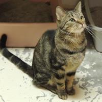 Adopt A Pet :: Zack - Westville, IN