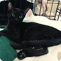 Adopt A Pet :: Raisin - Yorba Linda, CA