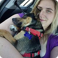 Adopt A Pet :: Dexter - Ogden, UT