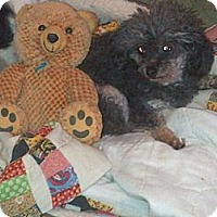 Adopt A Pet :: April - Antioch, IL
