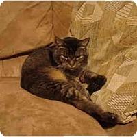 Adopt A Pet :: Buddy - Washington Terrace, UT