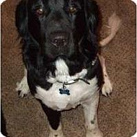Adopt A Pet :: Keaton - Adoption Pending - Lee's Summit, MO