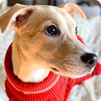 Adopt A Pet :: Magical Mimi - Brooklyn, NY