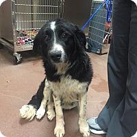 Adopt A Pet :: Sadie - Smyrna, GA