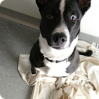 Adopt A Pet :: CAM - Sandusky, OH