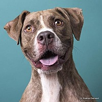 Adopt A Pet :: Tibble - Anniston, AL