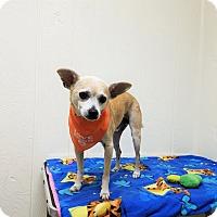Adopt A Pet :: Jesse - Tavares, FL