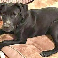 Adopt A Pet :: Tucker - Boulder, CO