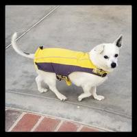 Adopt A Pet :: Stanley - Newport Beach, CA