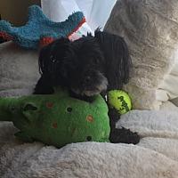 Adopt A Pet :: Peachy - Henderson, NV