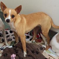 Adopt A Pet :: Jenny - Westminster, CA