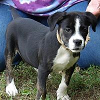 Adopt A Pet :: Kuma (10 lb) Video - Sussex, NJ