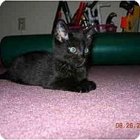 Adopt A Pet :: Nikki-Noodles - Mount Laurel, NJ
