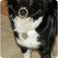 Adopt A Pet :: Boo - Glenrock, WY