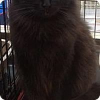 Adopt A Pet :: Moonlight - Modesto, CA