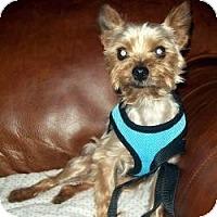 Adopt A Pet :: Bixby - Tallahassee, FL