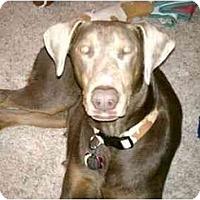 Adopt A Pet :: Bonnie--adopted!! - New Richmond, OH