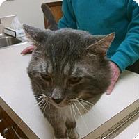 Adopt A Pet :: Hugo - Walla Walla, WA