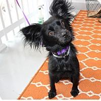 Adopt A Pet :: Roxie - Burbank, CA