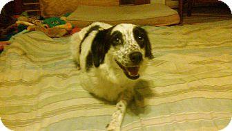 Border Collie Mix Dog for adoption in Hampton, Virginia - MEADOW