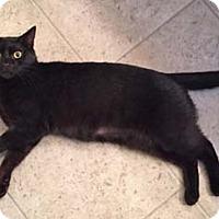 Adopt A Pet :: Johanna - Merrifield, VA