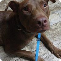 Adopt A Pet :: Chuck - Atlanta, GA