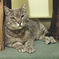 Adopt A Pet :: Smokey Joe - Colmar, PA