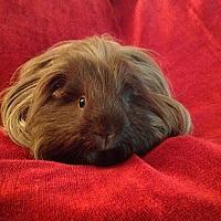 Adopt A Pet :: Donnie - Williston, FL
