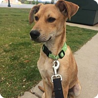 Adopt A Pet :: Rapunzel - Denver, CO