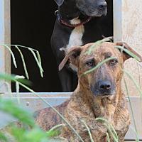 Adopt A Pet :: Stretch - Kingston, TN