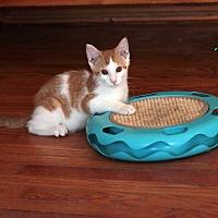 Adopt A Pet :: Monty - St. Louis, MO