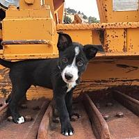 Adopt A Pet :: Agni - Reno, NV