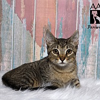 Adopt A Pet :: Periwinkle - Tomball, TX