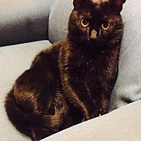 Adopt A Pet :: Boss - Asheville, NC