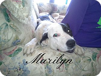 Border Collie Mix Dog for adoption in Shady Point, Oklahoma - Marilyn
