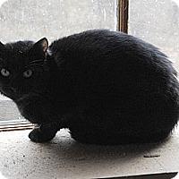 Adopt A Pet :: Onyx - Sanford, ME