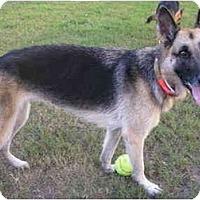 Adopt A Pet :: Star - Green Cove Springs, FL