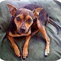Adopt A Pet :: Samantha - Nashville, TN