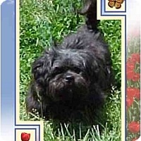 Adopt A Pet :: MacIntyre - Mays Landing, NJ