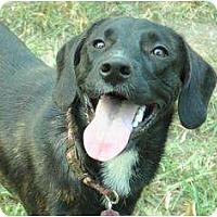 Adopt A Pet :: Jolene - Nashville, TN