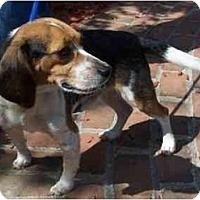 Adopt A Pet :: John - Toronto/Etobicoke/GTA, ON