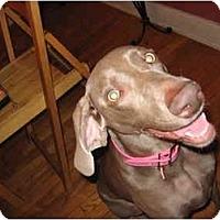 Adopt A Pet :: Bella  **ADOPTED** - Eustis, FL
