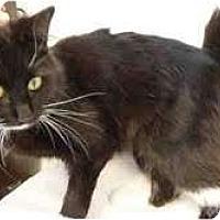 Adopt A Pet :: Blyss - Arlington, VA