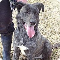 Adopt A Pet :: #089-14 @ Animal Shelter - Zanesville, OH