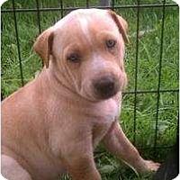 Adopt A Pet :: Kebi - Justin, TX