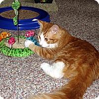 Adopt A Pet :: Oscar - Arlington, VA